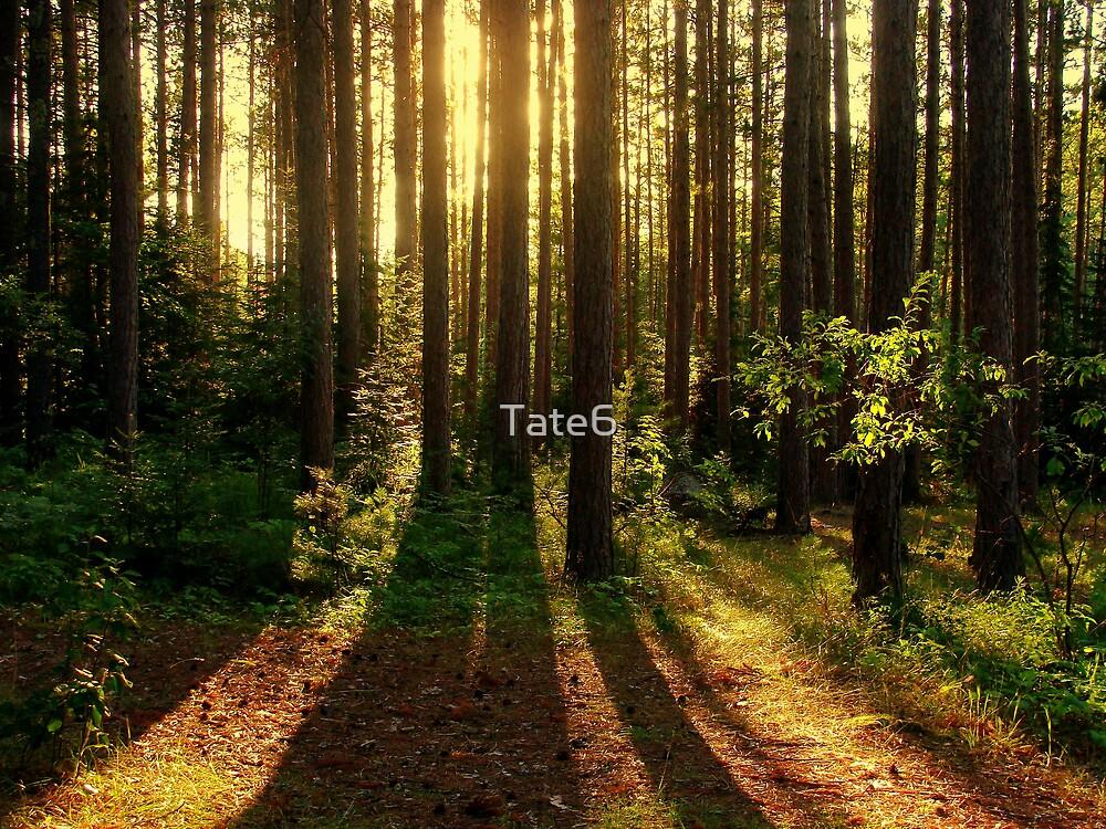 Spirit Renewed by Tate6