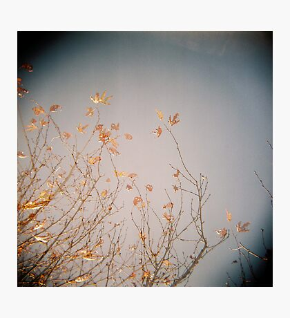 Last Leaves Photographic Print