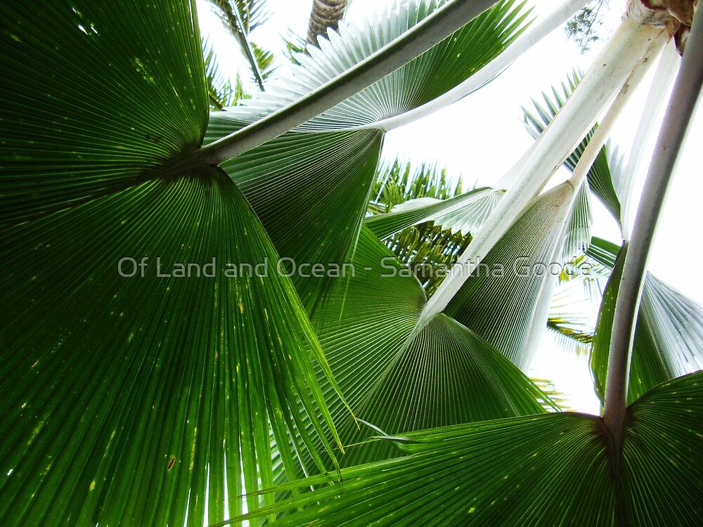 Palm Leaves by Of Land & Ocean - Samantha Goode