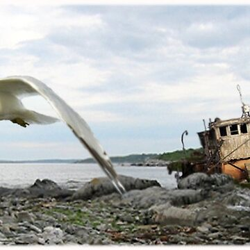 Wrecked Tugboat and Seagull by thegrafaxspot