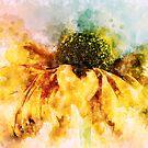 Water Colour Rudbeckia by Ann Garrett