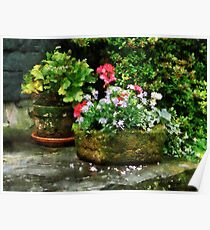 Geraniums and Lavender Flowers on Stone Steps Poster