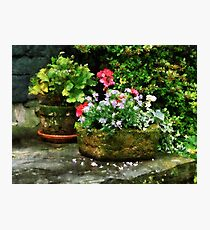 Geraniums and Lavender Flowers on Stone Steps Photographic Print