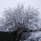 Snow Covered Tree by julieburnaby