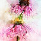Echinacea Water Splash by Ann Garrett