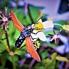 Garden visitor  2 by ♥⊱ B. Randi Bailey
