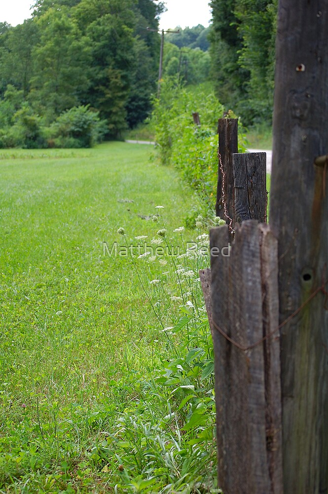 the other side of the fence. by Matthew Reed