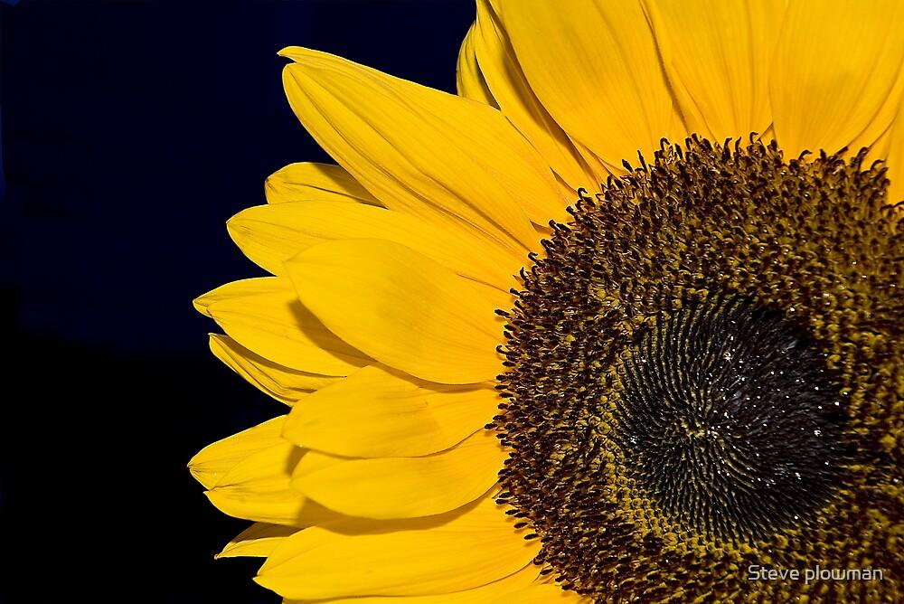 Sun bright by Steve plowman