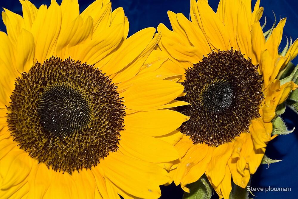 Sunny delight by Steve plowman