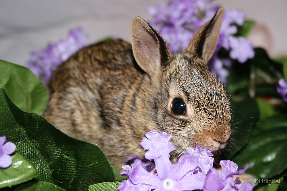 Bunny. by KBdigital