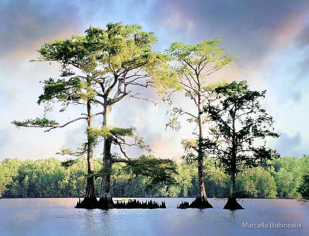 Louisiana Cypress Trees by Marcella Babineaux