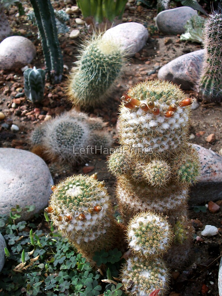 Assorted Cacti by LeftHandPrints