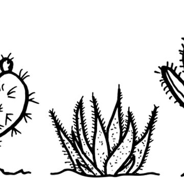 cactus by cynoba