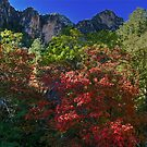 Guadalupe Mountains National Park McKitrick Canyon by StonePics