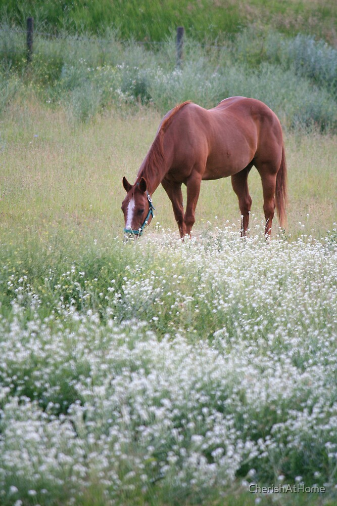 Grazing by CherishAtHome