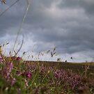 heather by NordicBlackbird