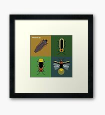 Photuris firefly life stages Framed Print