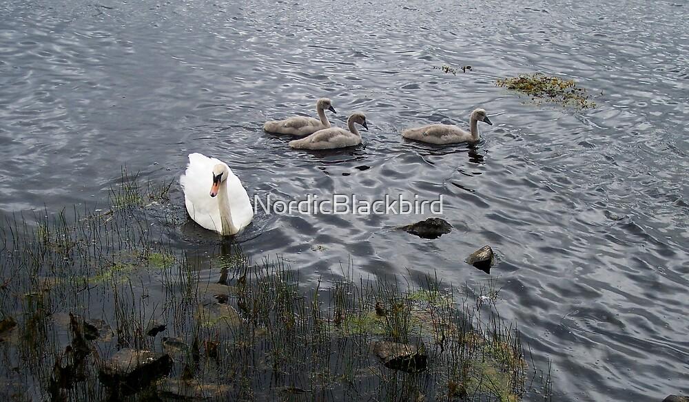 swansong by NordicBlackbird