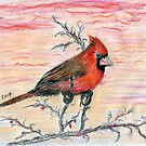 An Adorable Cardinal by Kashmere1646