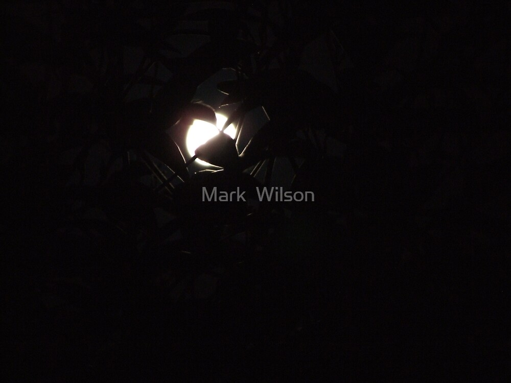 Untitled by Mark  Wilson