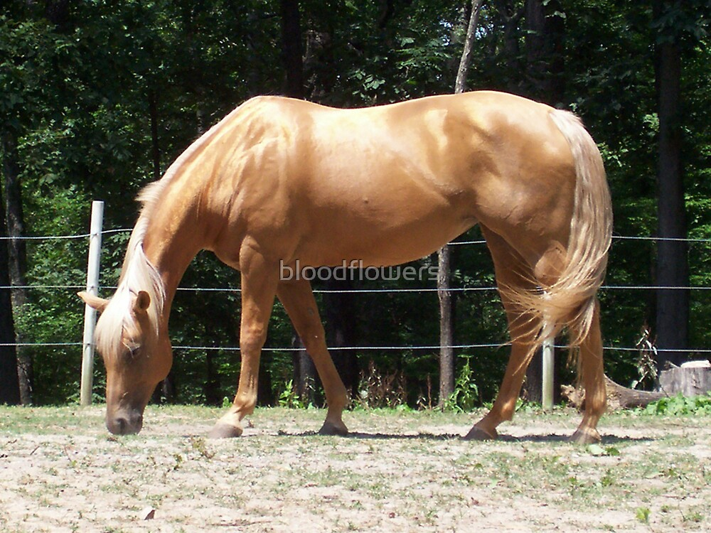 Palomino in the Sun by bloodflowers