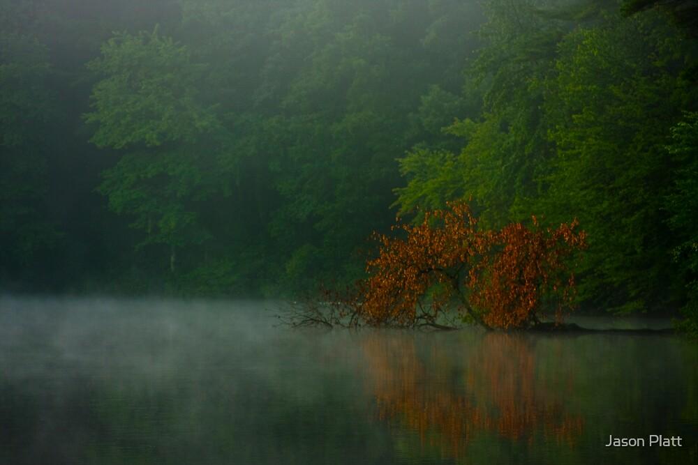 morning meditation in a pool of green by Jason Platt
