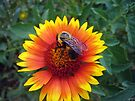 Bee on Gaillardia by FrankieCat
