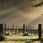 Sunrise at Magpie Springs -Adelaide Hills Wine Region- Fleurieu Peninsula. South Australia by MagpieSprings