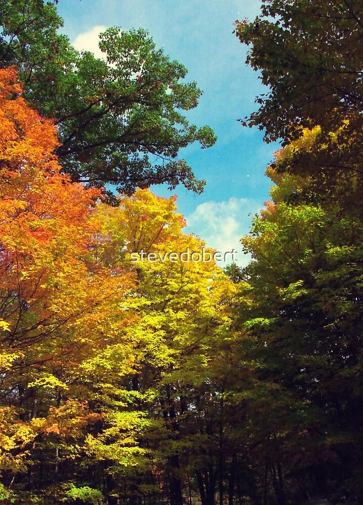 autumn road by stevedobert