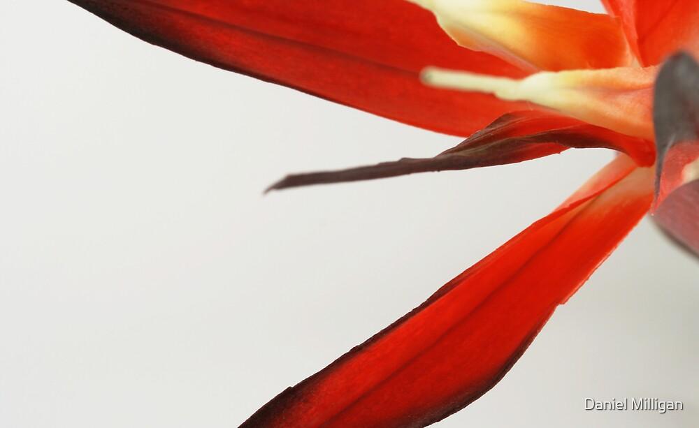 The Flower by Daniel Milligan