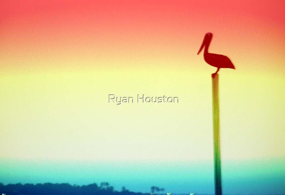 Colorful Pelican  by Ryan Houston