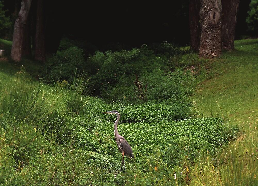 Great Blue Heron in Dreamland by Judi Taylor