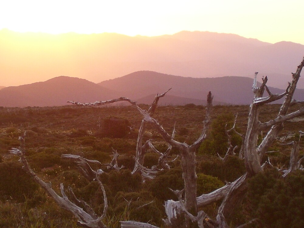 on Mt Read, Rosebery, Tasmania by gaylene