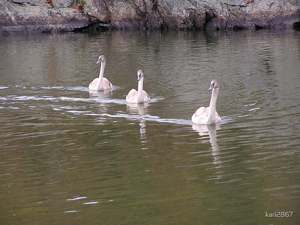 Mute swans by kari2867
