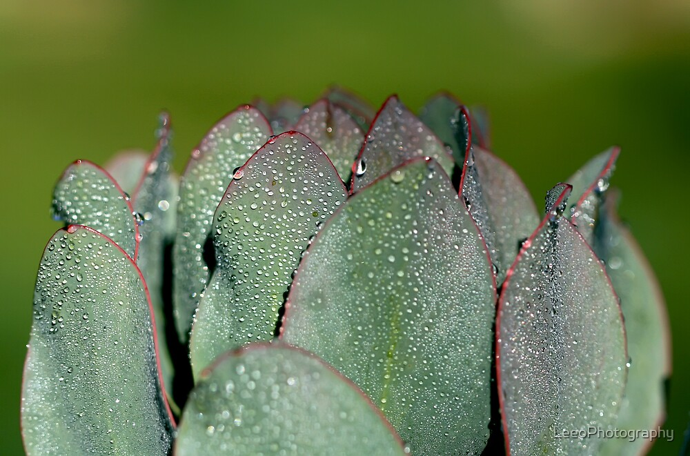 Droplets by LeeoPhotography
