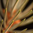 Needles by Steve  Taylor