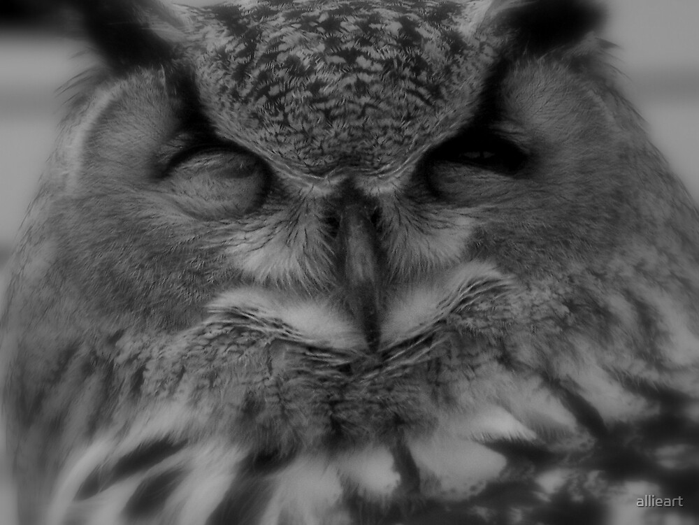 dreaming owl by allieart