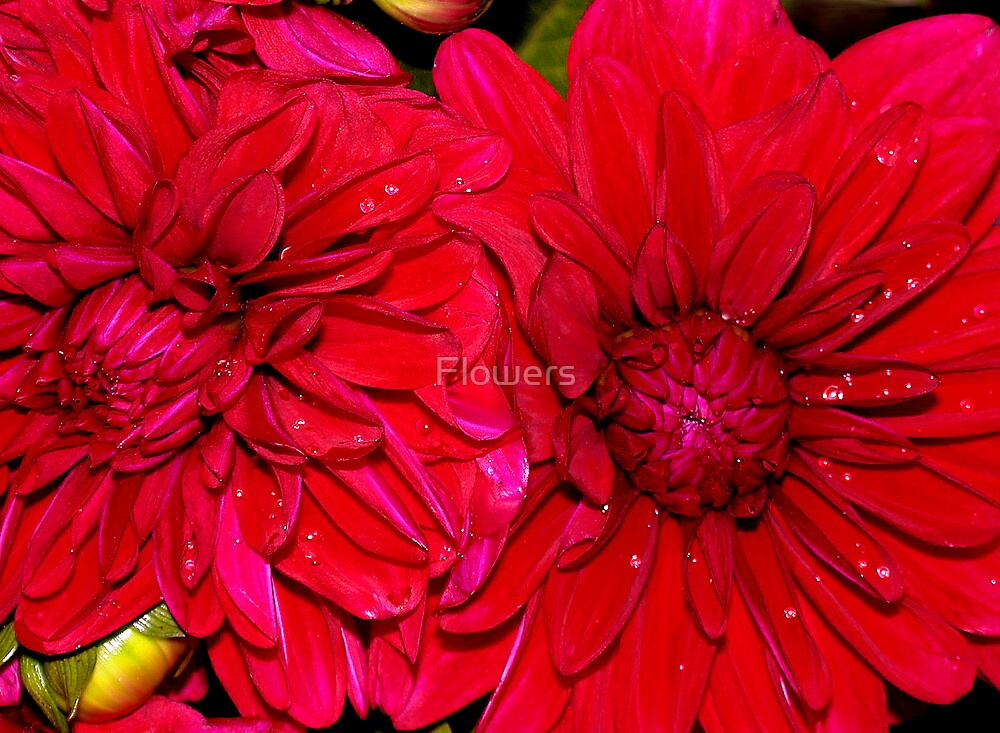 Burning Desire by Flowers