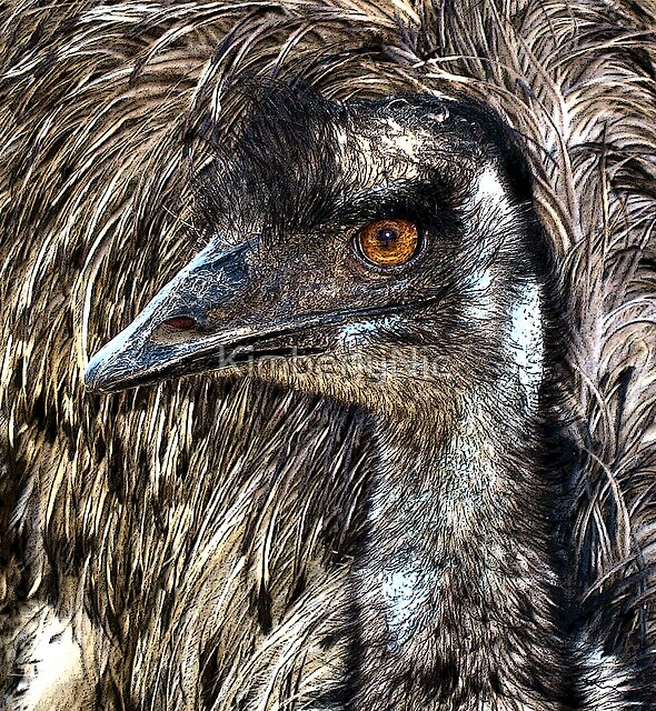 Old Man Emu by KimberlyNic