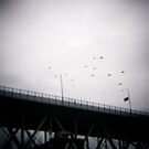 Tourist birds in Vancouver? by Gabriele Maurus