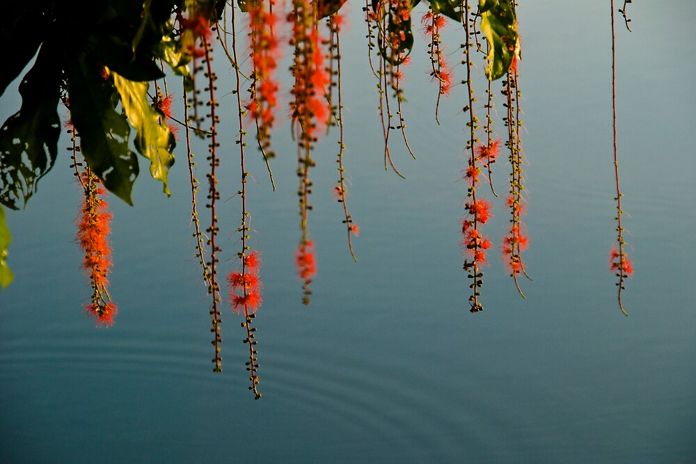hanging red flower chains and ripple by singlong