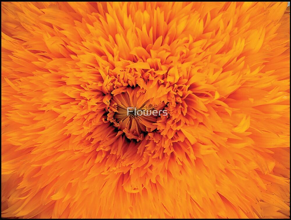 Orange Dream by Flowers