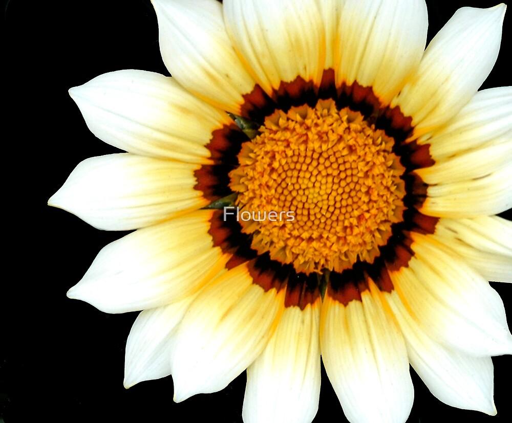 Sun Dance by Flowers