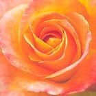 Rose by alan shapiro