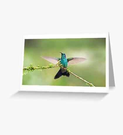 Green Violetear Hummingbird Greeting Card