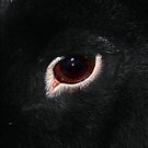 Eye of the Bun by Nori Bucci