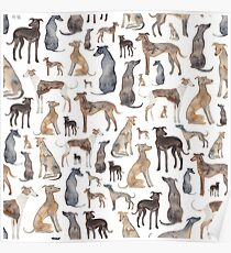 Windhunde, Wippets und Lurcher Hunde! Poster
