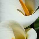 Arum Lilies by Ludwig Wagner