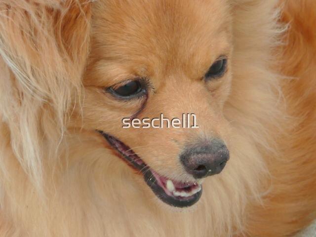 Happy Jasper  by seschell1
