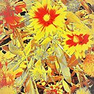 Blanket flower patch by ♥⊱ B. Randi Bailey